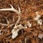 Excavations - deer soul on floor